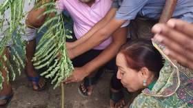 বাড়ি মজলিস সরকারি প্রাথমিক বিদ্যালয়ে বৃক্ষ রোপন উদ্বোধন