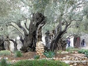 Le jardin de Gethsémané