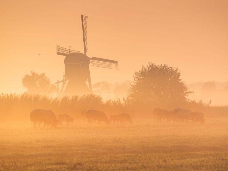 Mooie zonsopkomst met mist en molens.