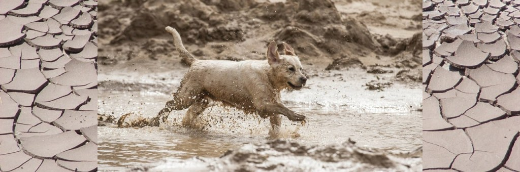 Mud has many benefits for your dog. It can soothe irritations by removing dead irritated skin. It can soothe hot spots. The Rhassoul mud applied to your dogs coat during the bath can help moisturize the skin and remove dandruff. This is very beneficial in the winter when the air is drier. ghassoul Mud baths have also been known to help diminish the pain of arthritis. Rhassoul baths can also help with flea control.