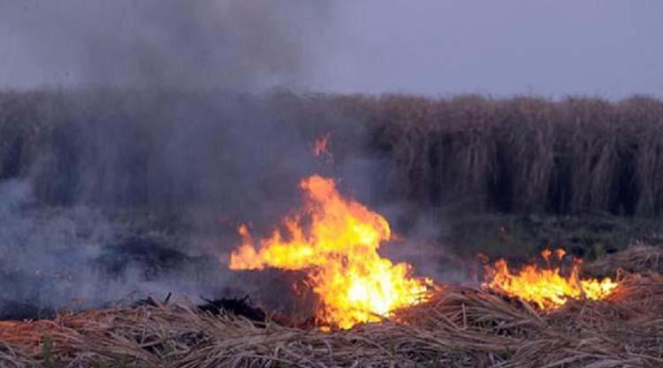 Nuevas medidas contra la quema ilegal de cañaverales