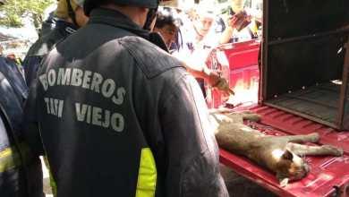 Photo of Apareció un puma en Los Nogales