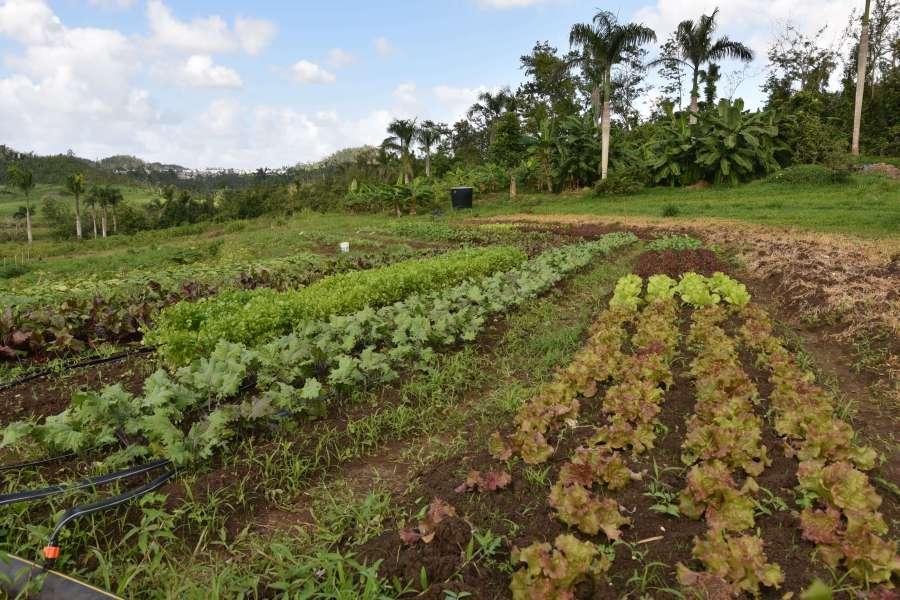 Foto Agricultura 1
