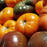 tomatoes crisp horizontal