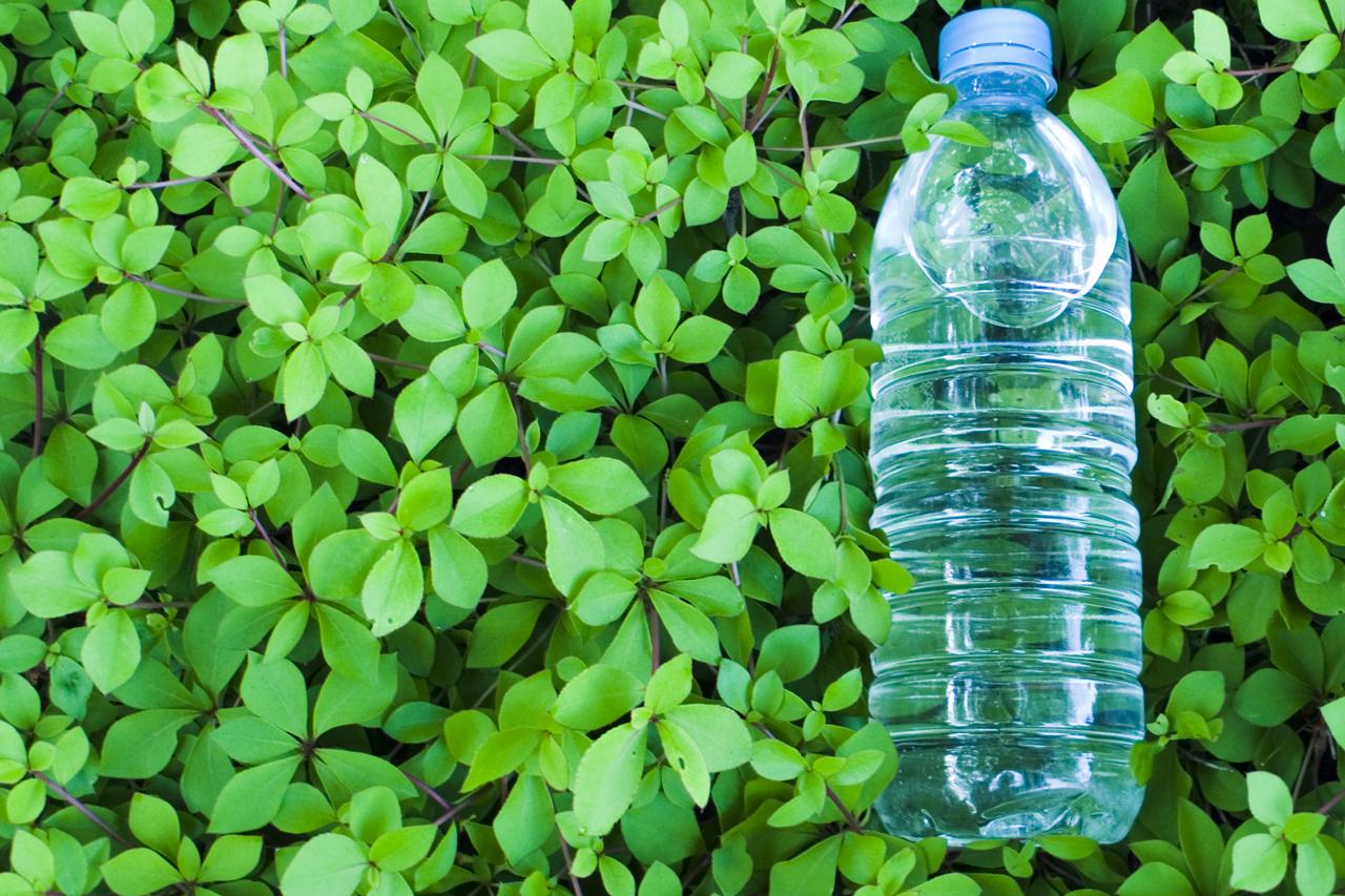 Botella sobre hojas