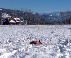 deer carcass cabin
