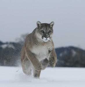 mt lion snow