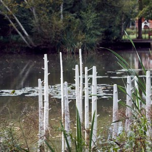 'Trees' installation by Elaine Bolt at the Pond House Isfield, photographed by Alun Callender