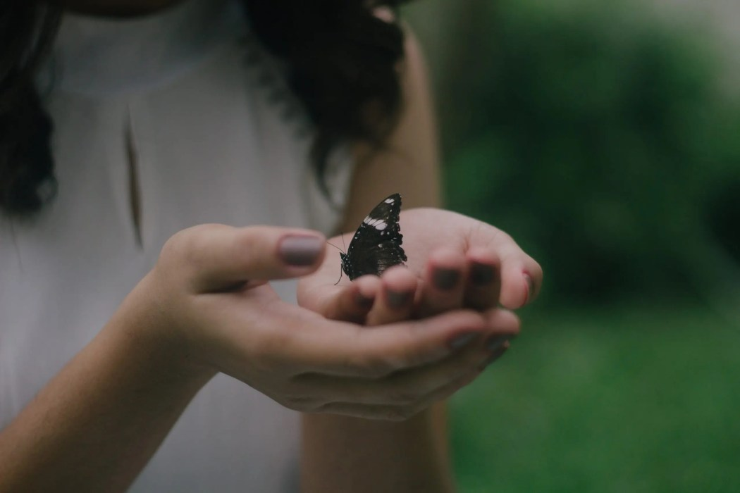 Butterfly cupped in hands