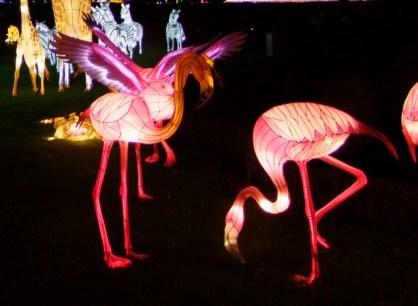 Longelat flamingo 3