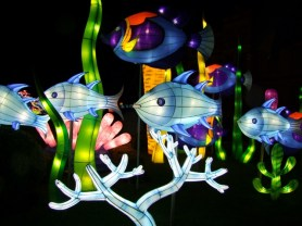 Longleat fish 1