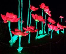 Longleat flowers 4
