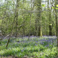 Friday letters - the bluebell edition