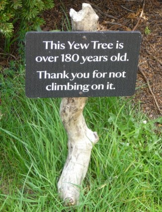 yew tree sign