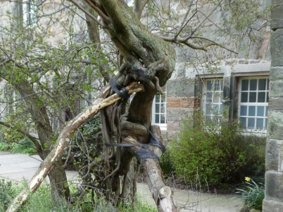 Ancient thorn tree
