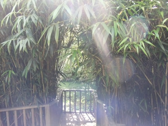 Looking through bamboo towards a pond