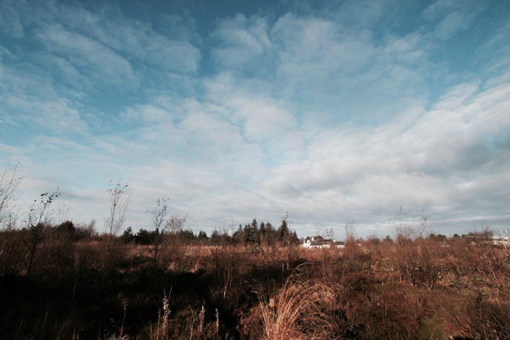 elainesrovesntroves-an-acreagan-landscape
