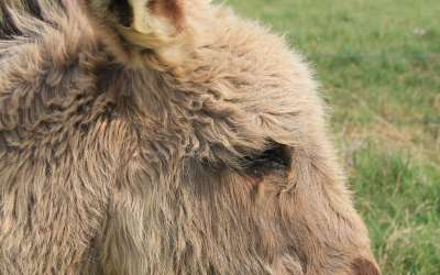 What's a miniature donkey to do?