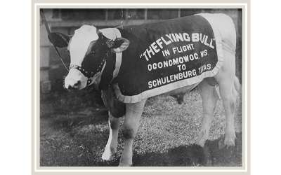 The Day Schulenburg, Texas, Welcomed a Flying Bull