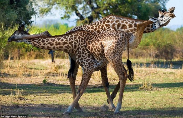 Inteligența și frumusețea animalelor-Galerie FOTO 1