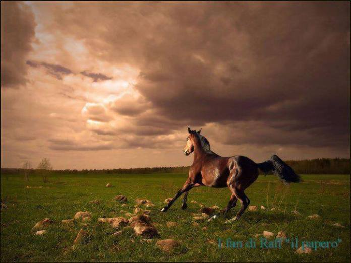 Inteligența și frumusețea animalelor-Galerie FOTO 35