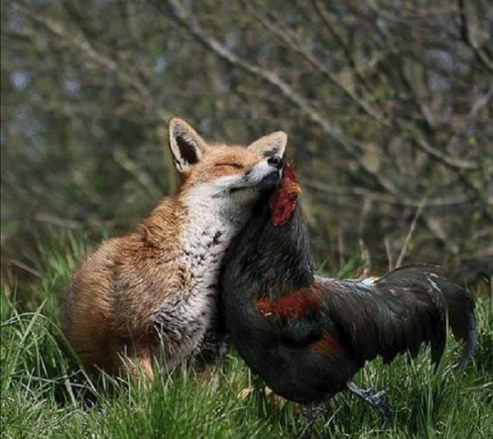 Inteligența și frumusețea animalelor-Galerie FOTO 22