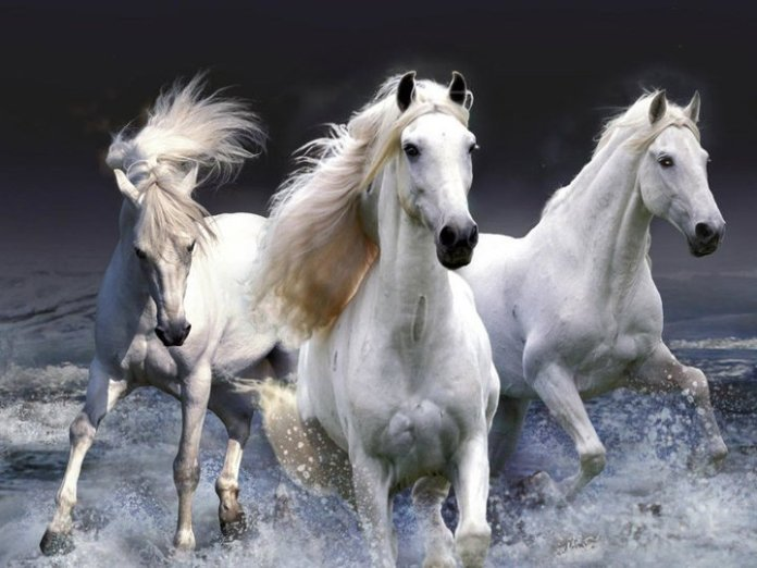 Inteligența și frumusețea animalelor-Galerie FOTO 10