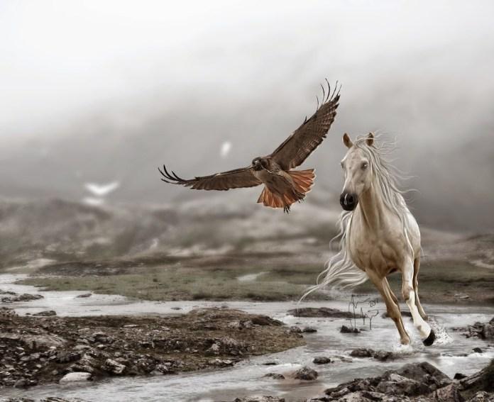 Inteligența și frumusețea animalelor-Galerie FOTO 43