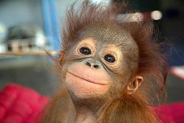 Inteligența și frumusețea animalelor-Galerie FOTO 45