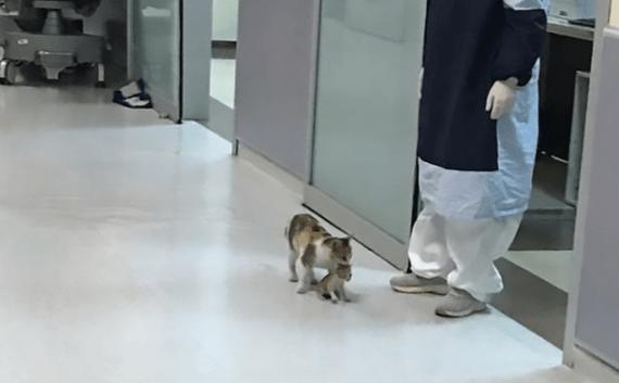 O pisică și-a cărat puiul bolnav la spital. L-a lăsat doar când a ajuns la medic 3