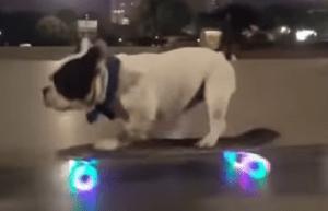 Un Câine pe skateboard (Video)