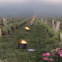 Imagini incredibile: viticultorii francezi luptă pentru a salva cele mai scumpe vinuri din lume