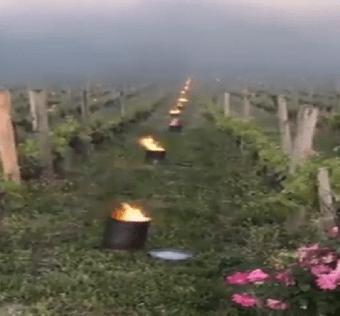 viticultorii francezi luptă să-și salveze vinurile