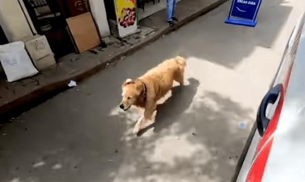 loialitatea unui câine