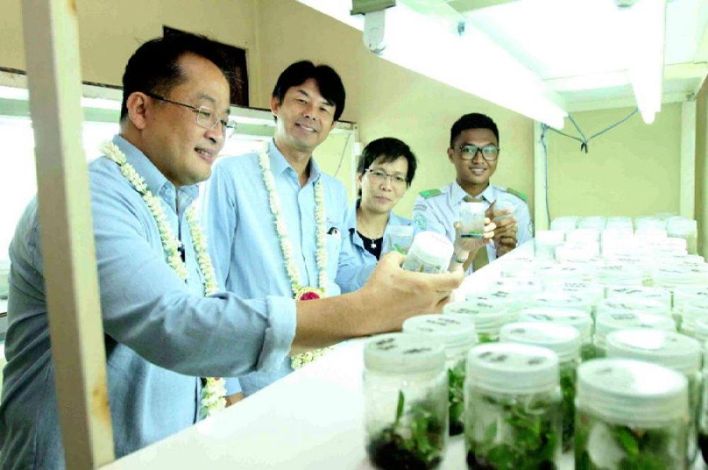Yayasan AHM Dukung Pelestarian Bekantan