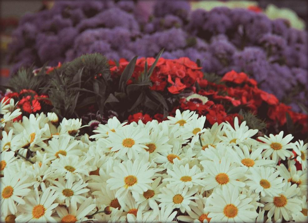 Flores Roma
