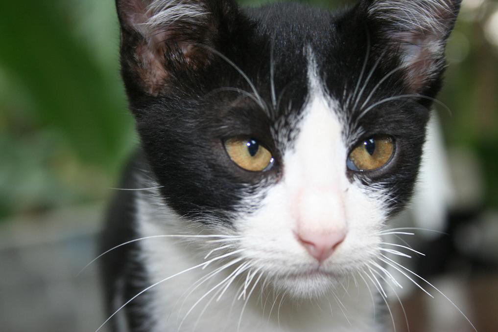 TIP  Menjadikan Kucing Kampung Sekelas Kucing Persia