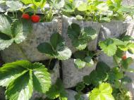 45_149_huerto vertical fresas