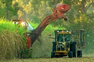 tully cane growers