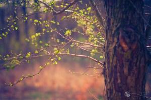 Fotos primaverales