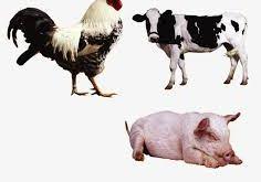 El aumento de los veganos salvó 400 millones de vidas