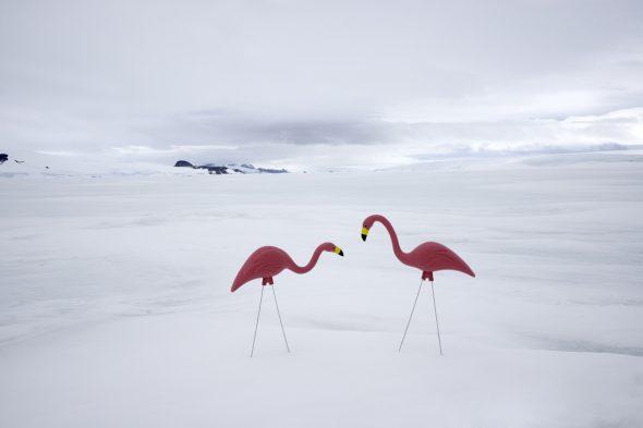 Dos flamencos. Fotografía de la serie Antártica de Gray Malin.