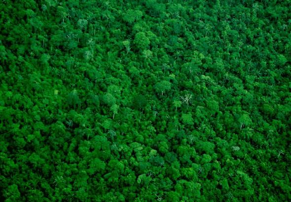Amazonía. Foto: Ana Cotta / Flickr Creative Commons.