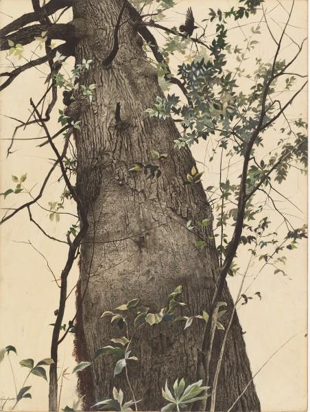 Andrew Wyeth. 'El roble', 1944. National Gallery of Art. Donación de Edward Hyde Cox.