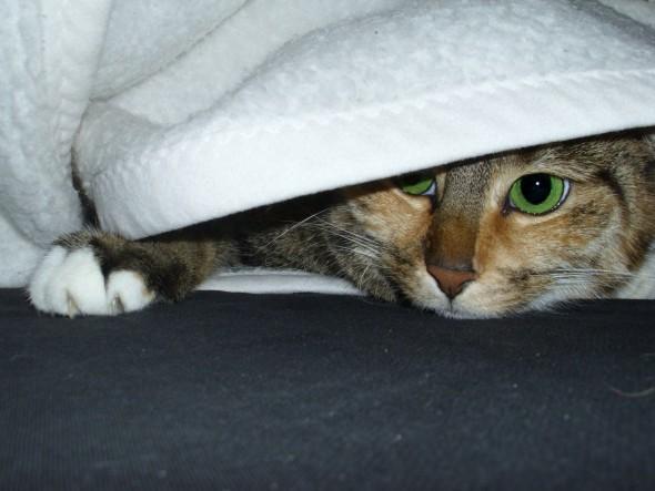 El gato 'terapeuta' de Superscheeli. Flickr CC.