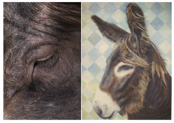 A la izquierda: Ruth Montiel Arias, 'Cosmos', Fotografía. A la derecha: Amor Díez, 'Burro', 2015. Acrílico sobre lienzo.