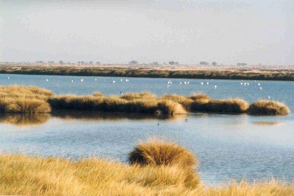 Marismas en el Parque Nacional de Doñana. Foto: Creative Commons.
