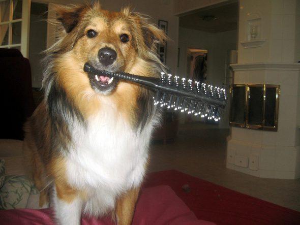 La perrita Lulú con un cepillo. Foto: Anniina Rutanen / Flickr Creative Commons.