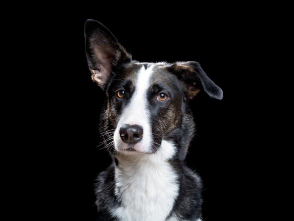 La personalidad y las emociones de 140 gatos y perros emergen de las fotografías del proyecto 'Alma Animal', de Robert Bahou.