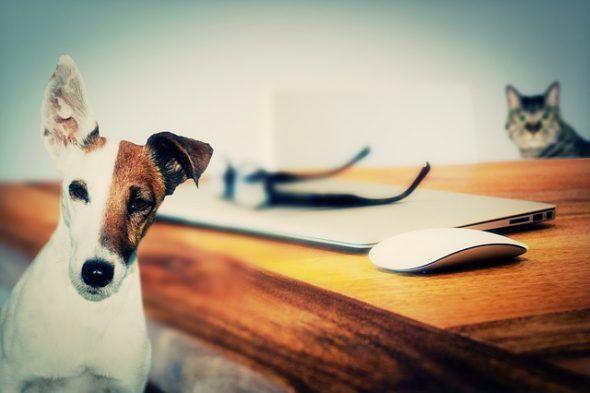Perro y gatos caseros. Foto: Pixabay.